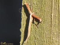 Microvlinders-Filmpjes