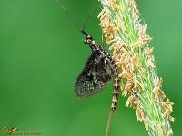 overige-insecten