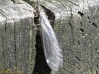 Overige insecten A-tot-Z