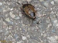 Overige insecten Families