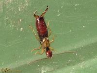 Overige insecten Fotoalbum