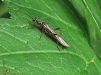 Overige insecten Overzicht