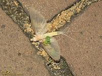 Overige insecten Soorten