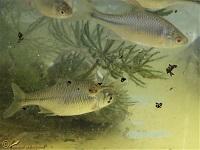 Vissen-Families