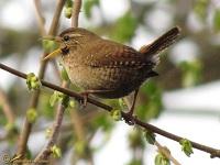 vogels-geluiden