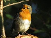 vogels-soorten
