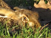 zoogdieren-fotos-1