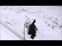 Ulli de sneeuwschuiver