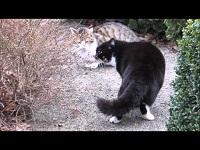 Huiskatten