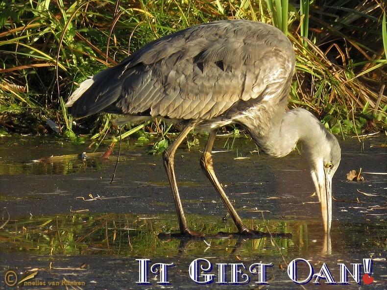 It Giet Oan!