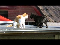 Maartse Katten