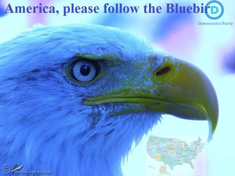 USA Elections 2016