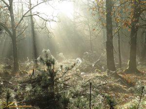 Herfst in het Deelerwoud