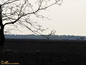 Leven na de brand (Heidebrand Hoge Veluwe 20-04-2014)
