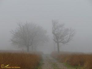 Mist 06-12-2014