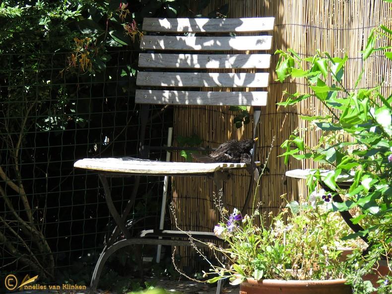 Tenminste 1 is er blij op dit moment, met die #zonnige plek in onze tuin. #warm !